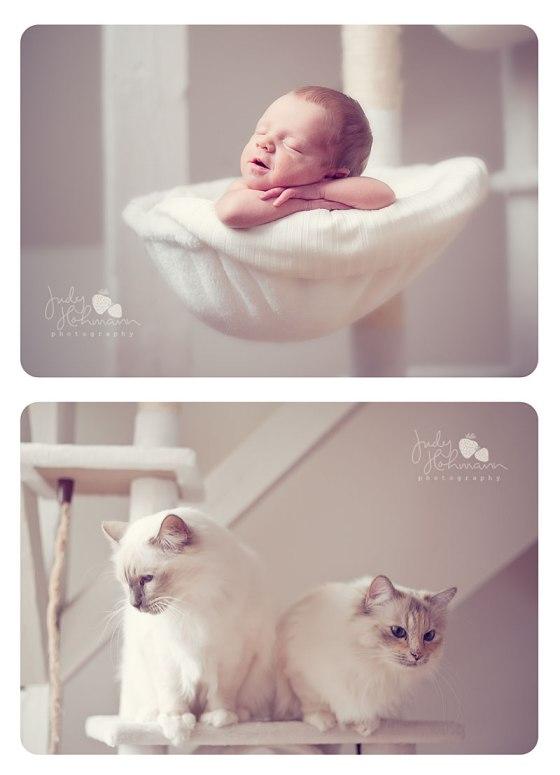 Baby_mit_Katzen_Fotografie